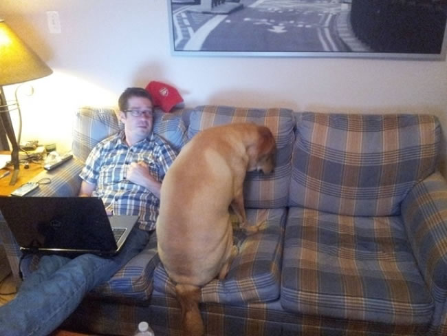 30 Funny Dogs Who Don't Know How To be Dogs 5