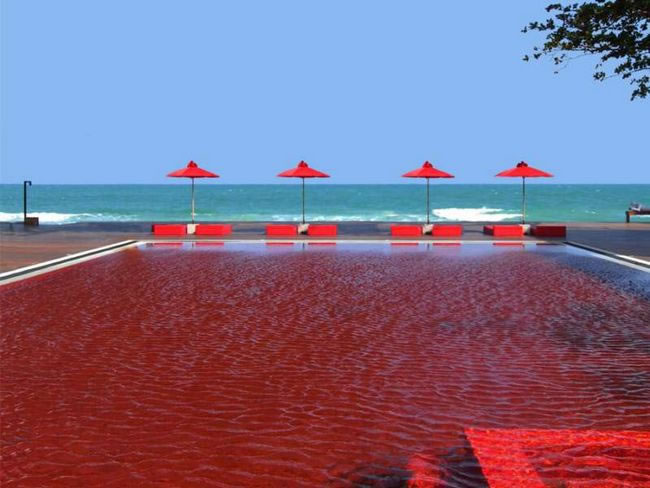 31 Most Beautiful Custom Swimming pools To Swim In Before You Die 11