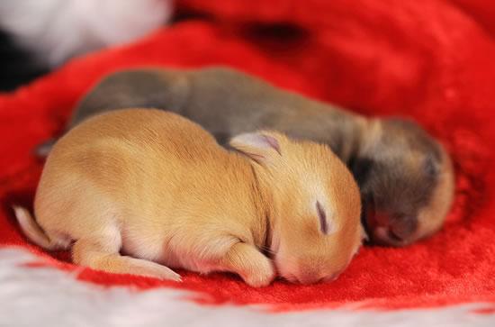 Cute Rabbits Sleepy Time 30 Adorable Snoozing Bunnies (2)