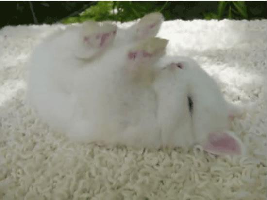 Cute Rabbits Sleepy Time 30 Adorable Snoozing Bunnies (6)