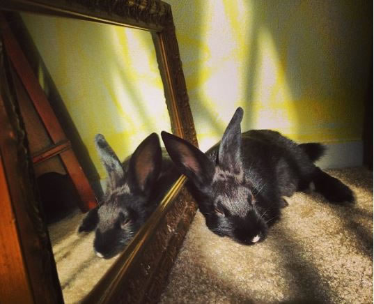 Cute Rabbits Sleepy Time 30 Adorable Snoozing Bunnies (8)