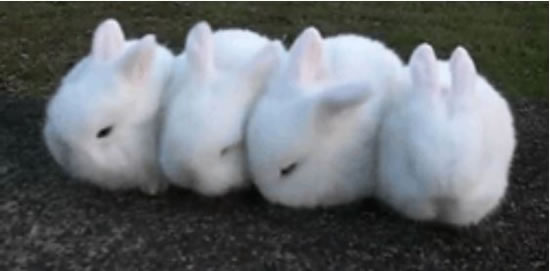 Cute Rabbits Sleepy Time 30 Adorable Snoozing Bunnies (9)