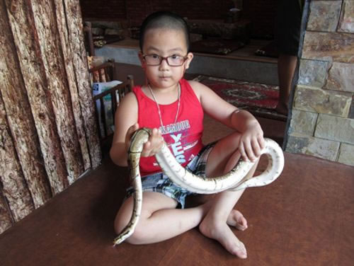 Enjoy a Coffee With Snakes And Scorpions At Vietnam's New Pet cafe 3