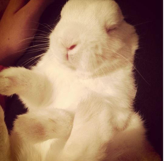 Rabbits Sleepy Time 30 Adorable Snoozing Bunnies (1)
