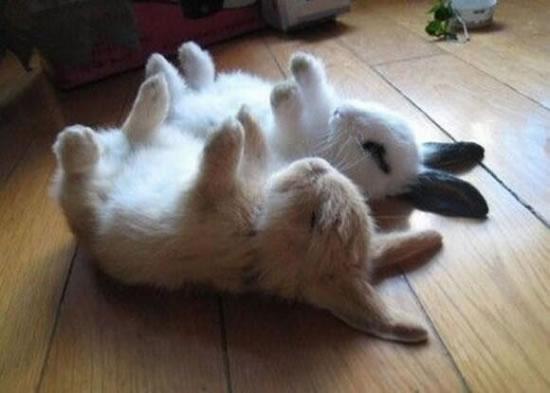 Rabbits Sleepy Time 30 Adorable Snoozing Bunnies (13)