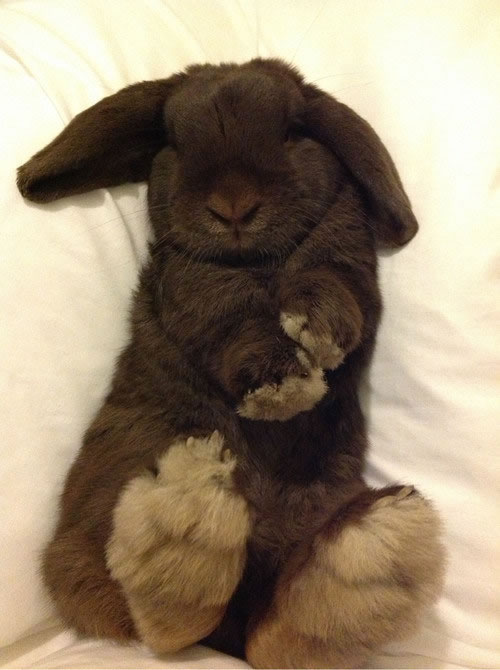 Rabbits Sleepy Time 30 Adorable Snoozing Bunnies (15)