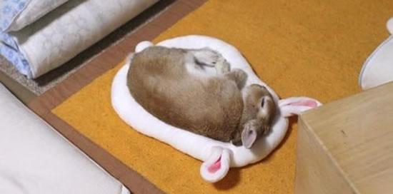 Rabbits Sleepy Time 30 Adorable Snoozing Bunnies (17)