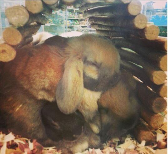 Rabbits Sleepy Time 30 Adorable Snoozing Bunnies (4)