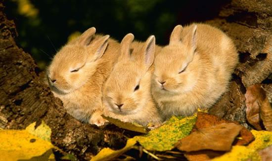 Rabbits Sleepy Time 30 Adorable Snoozing Bunnies (5)