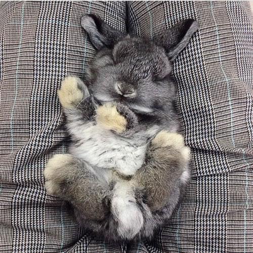 Rabbits Sleepy Time 30 Adorable Snoozing Bunnies (6)