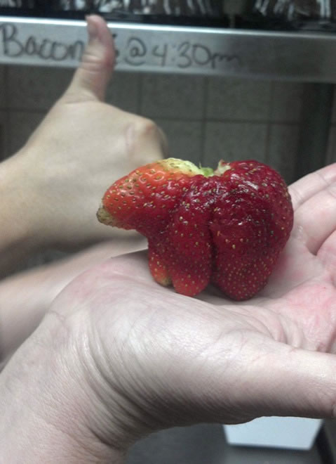 Strawberry Bear - Vegetables That Are Shaped Like Something Else 9