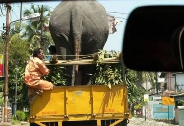 12 Crazy Photos Of Animals In Transport 11