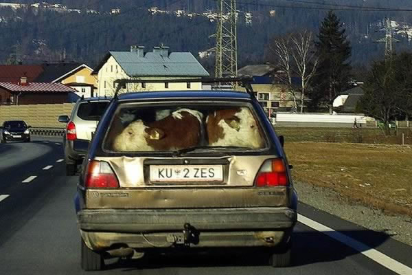 12 Crazy Photos Of Animals In Transport 3