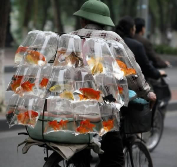 12 Crazy Photos Of Animals In Transport 8