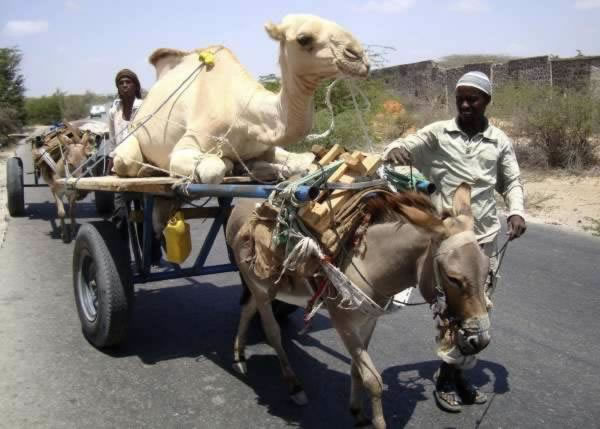 12 Crazy Photos Of Animals In Transport 9