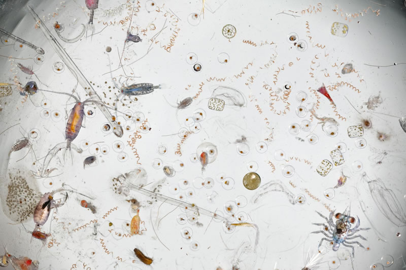 Amazing-Images-Of-Magnified-Seawater-25-Times-Larger-1