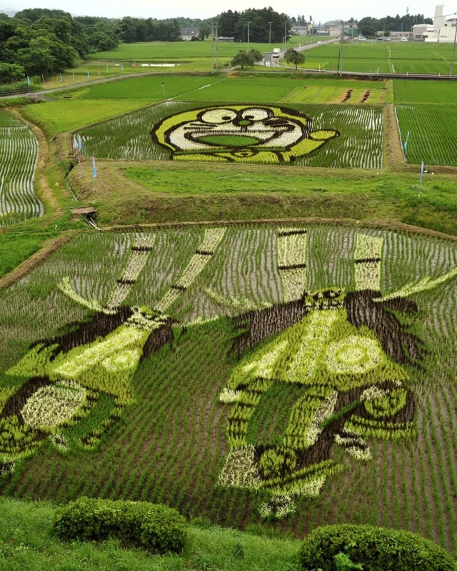 Fields Of Rice Turned Into Amazing Rice Paddy Art In Japan 2