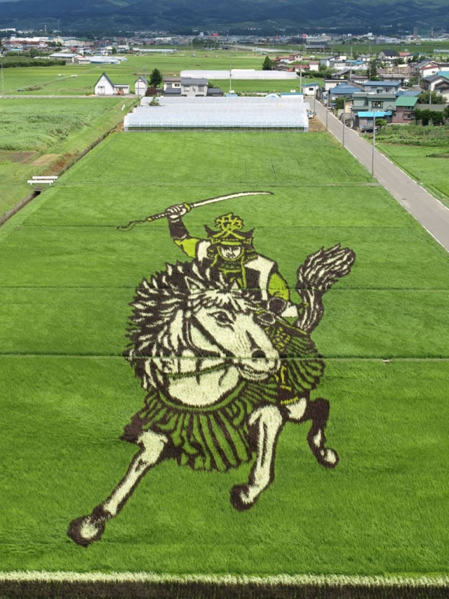 Fields Of Rice Turned Into Amazing Rice Paddy Art In Japan 5
