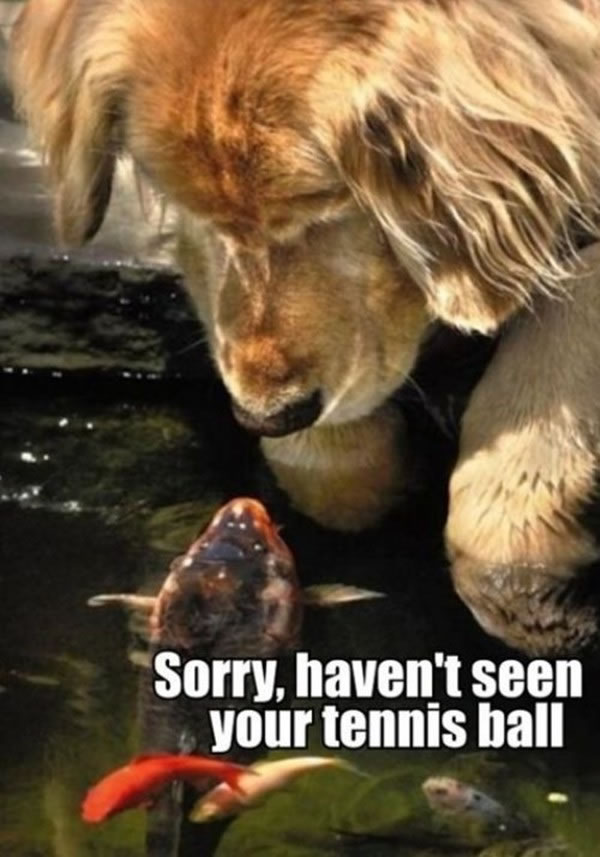 Picture Gallery Of Animals With Funny Captions 21