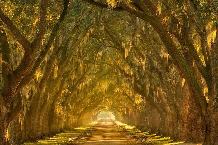 Tree Tunnels – Magical Designs From Nature 3