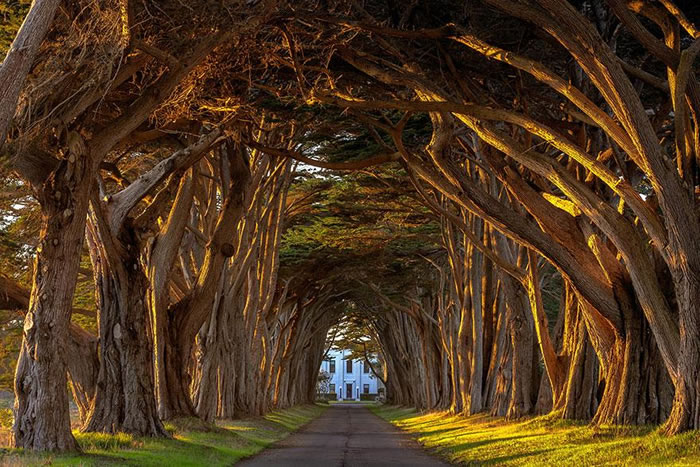 Tree Tunnels – Magical Designs From Nature 6
