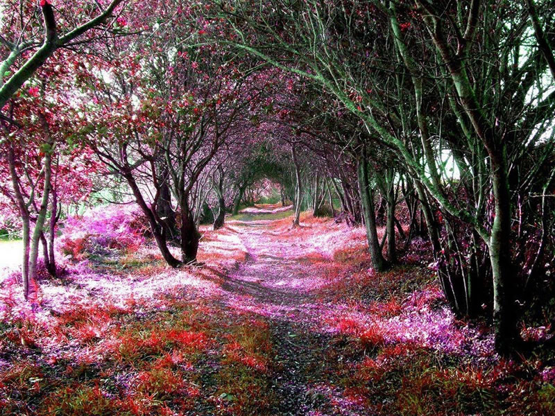 tree-tunnel-Sena-de-Luna-Spain