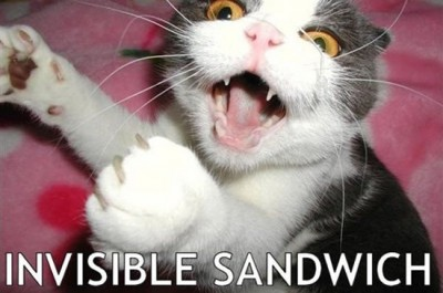 17 Of The Best Invisible Cat Pictures