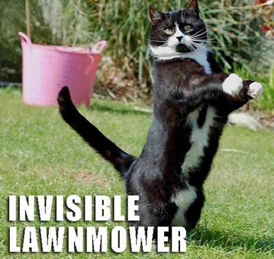 17 Of The Best funny Cat Pictures 14