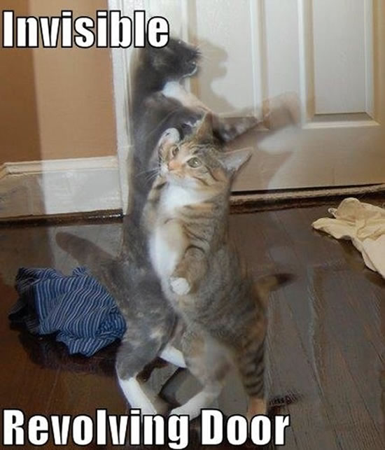 17 Of The Best Invisible Cat Pictures 16