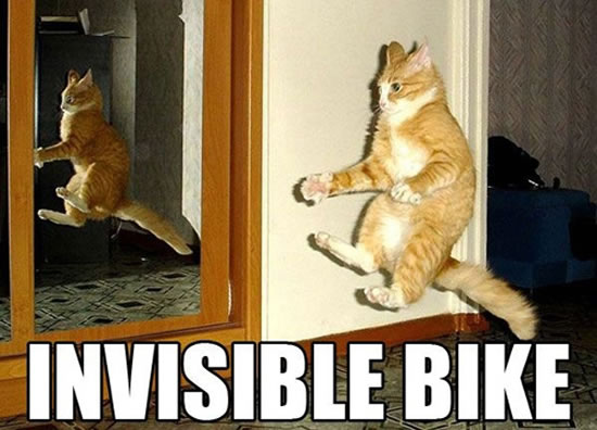 17 Of The Best Invisible Cat Pictures 2