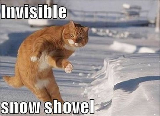 17 Of The Best Invisible Cat Pictures 3