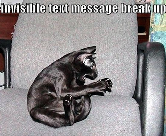 17 Of The Best Invisible Cat Pictures 4