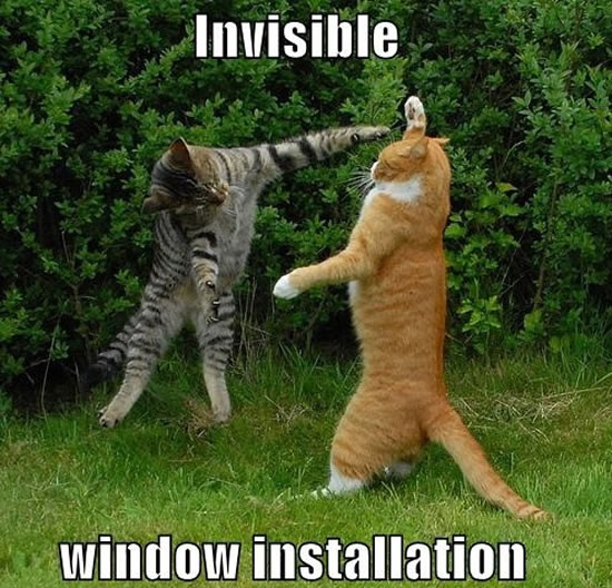 17 Of The Best Invisible Cat Pictures 5