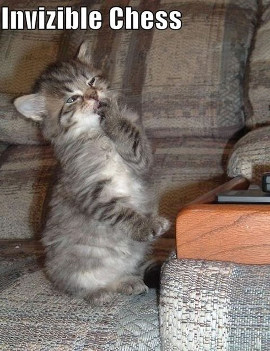 17 Of The Best Invisible Cat Pictures 6