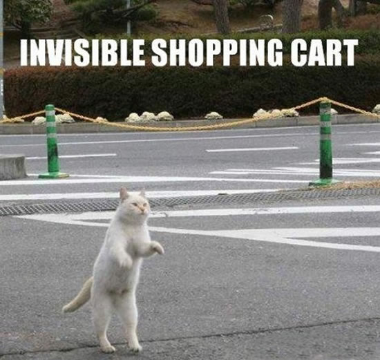 17 Of The Best funny Cat Pictures 8