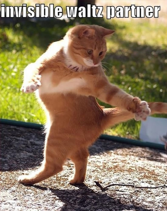 17 Of The Best funny Cat Pictures 9