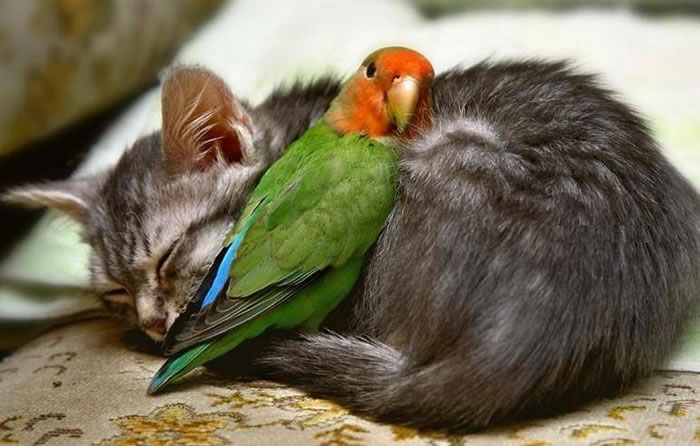 20 Adorable Pictures Of Cats And Parrots As Friends 1