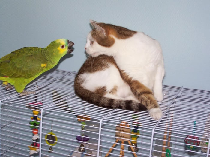 20 Adorable Pictures Of Cats And Parrots As Friends 11