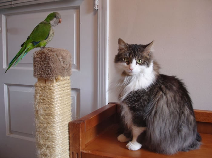 20 Adorable Pictures Of Cats And Parrots As Friends 13