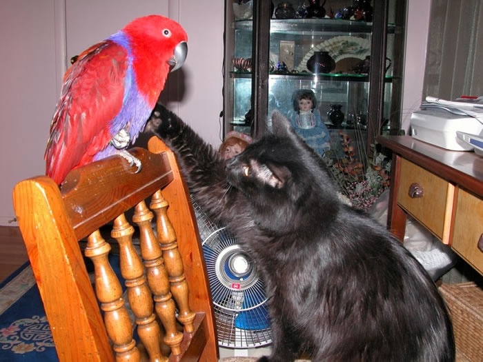 20 Adorable Pictures Of Cats And Parrots As Friends 15