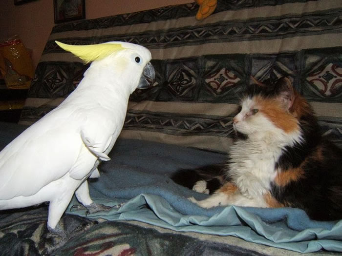 20 Adorable Pictures Of Cats And Parrots As Friends 17