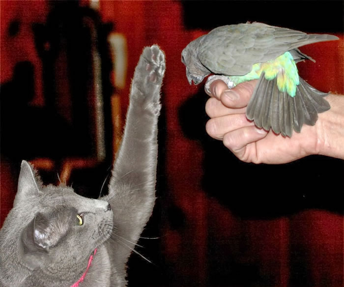 20 Adorable Pictures Of Cats And Parrots As Friends 9