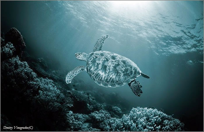 28 Amazing Pictures Of Turtles 11