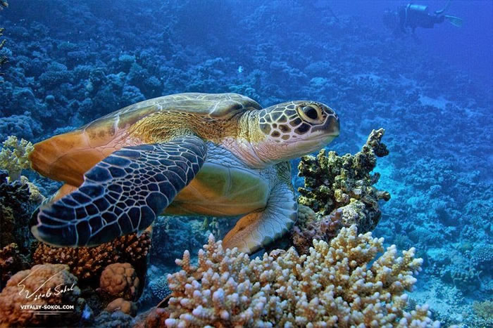 28 Amazing Pictures Of Turtles 12