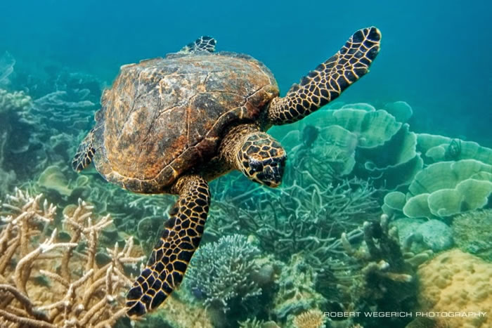 28 Amazing Pictures Of Turtles 13