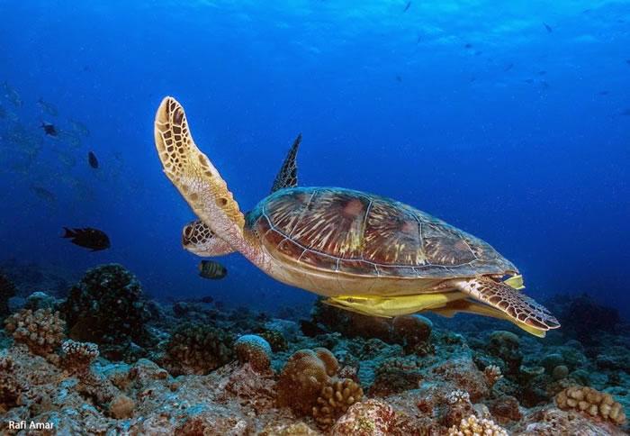 28 Amazing Pictures Of Sea Turtles 14
