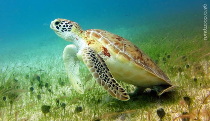 28 Amazing Pictures Of Turtles 15