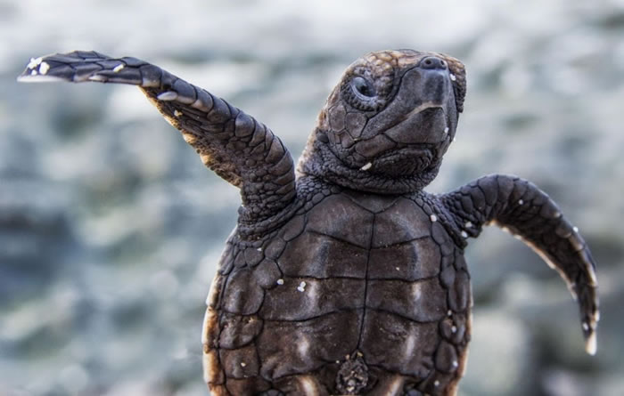 28 Amazing Pictures Of Turtles 16