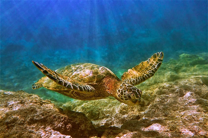 28 Amazing Pictures Of Turtles 18