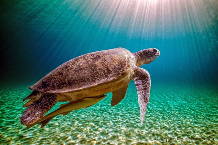 28 Amazing Pictures Of Turtles 19